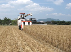 香川の小麦収穫風景